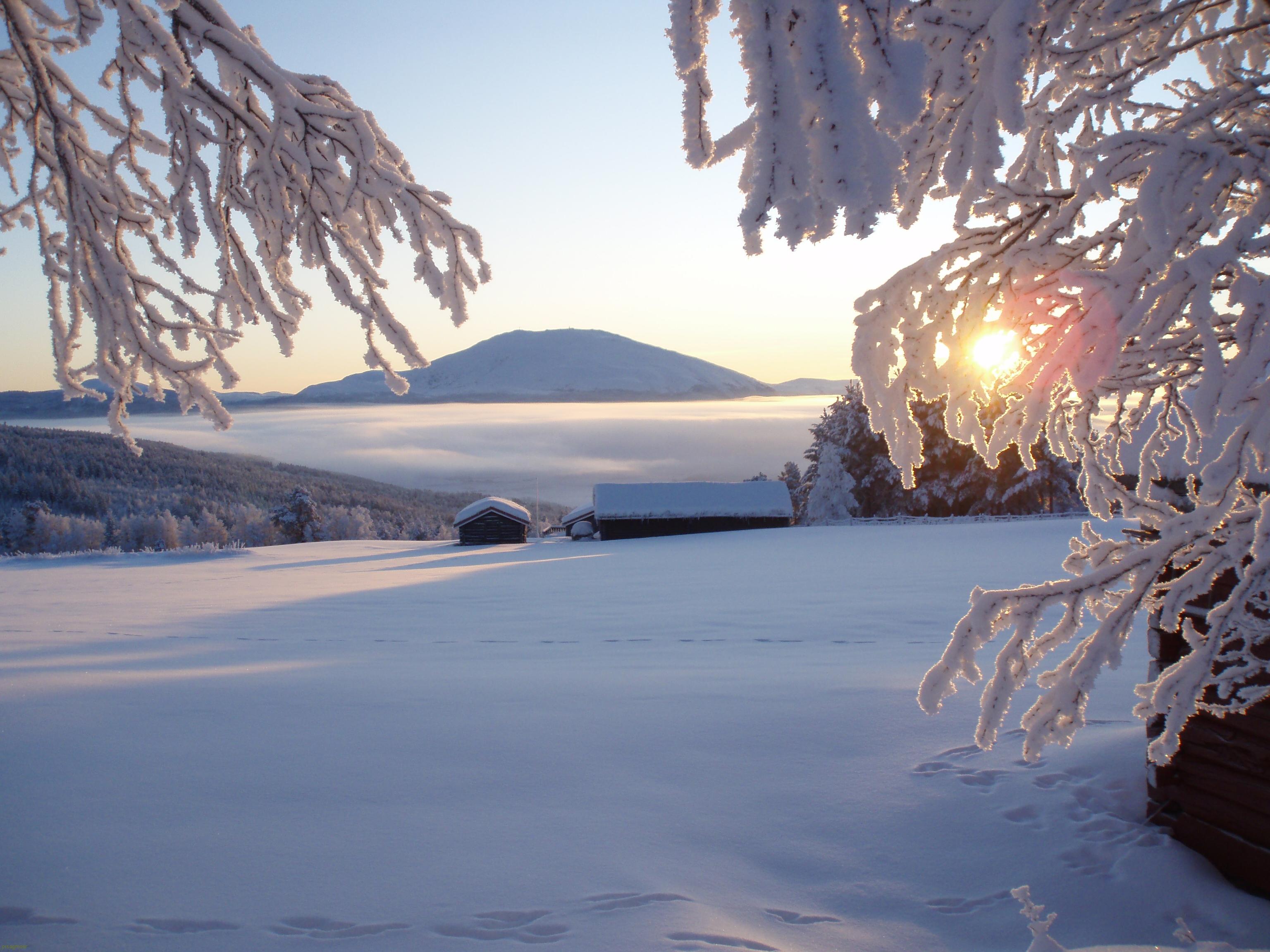 Lav desembersol, Kvannrøsta