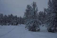 Skispor Åsan