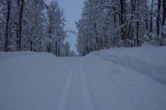 Skispor i almanaveien Åsan