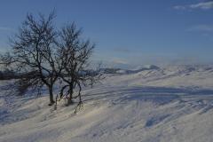 Vinterfjell, ved Tunnvola mot Rødalshø