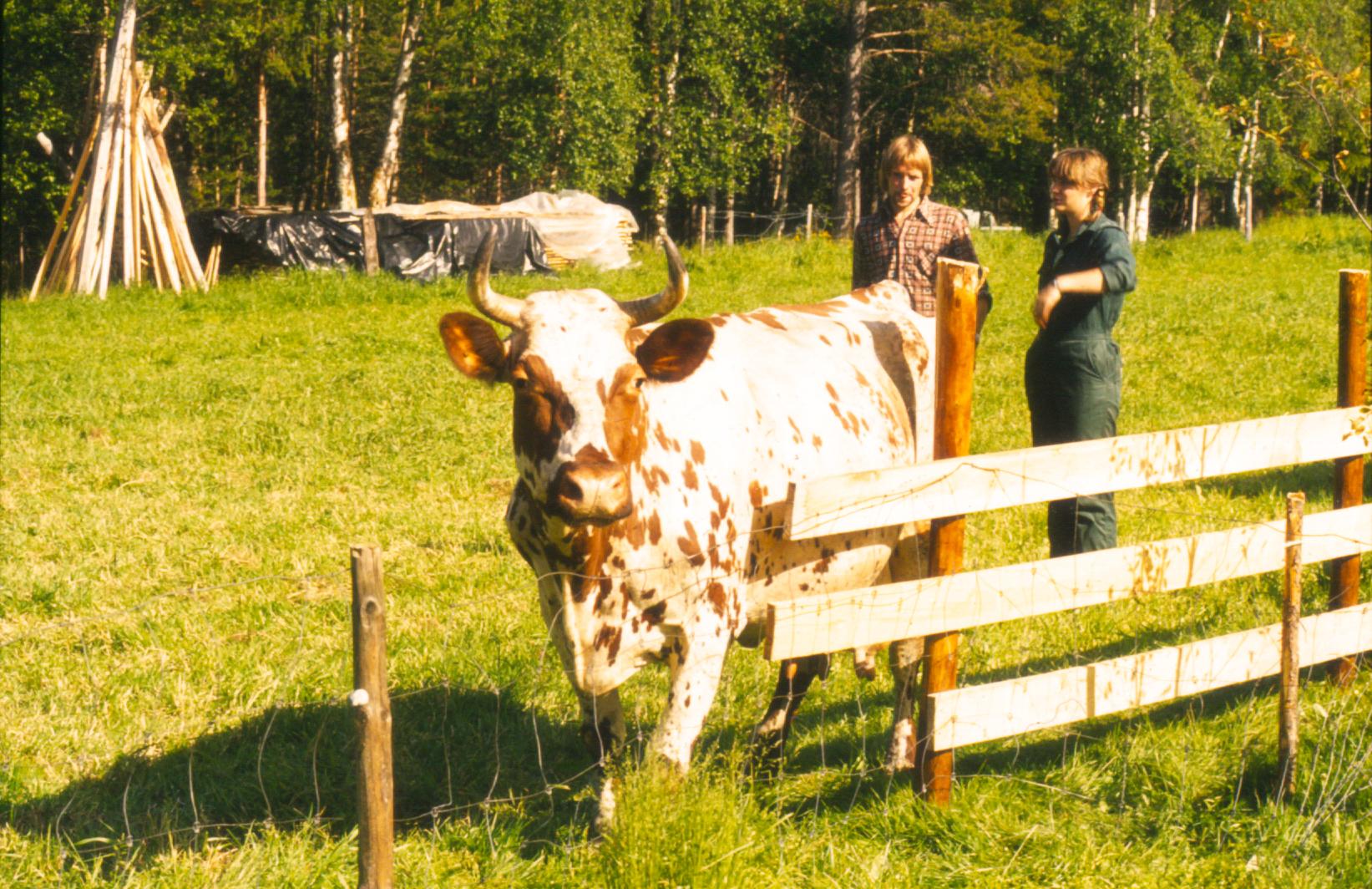 kuslipp-1980